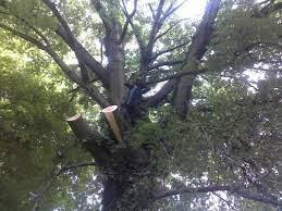Fahey Tree Services and Maintenance Limerick