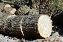 Fahey Tree Services and Gardening Maintenance Kilkenny
