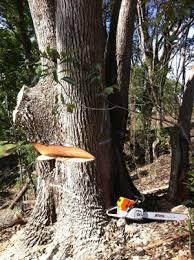 Tree Felling Dungarvan Healy Tree Services