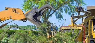 Dave English Tree Felling Tipperary