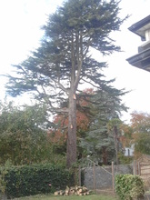 Broderick Tree Services in Cork