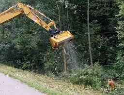 Tree Surgery Cork Mullins Tree Care