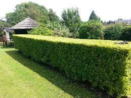 Seymour Garden Services Nenagh