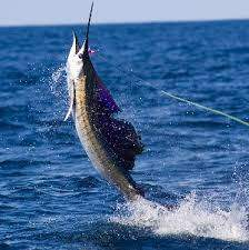ballybrittas fishing and camping supplies