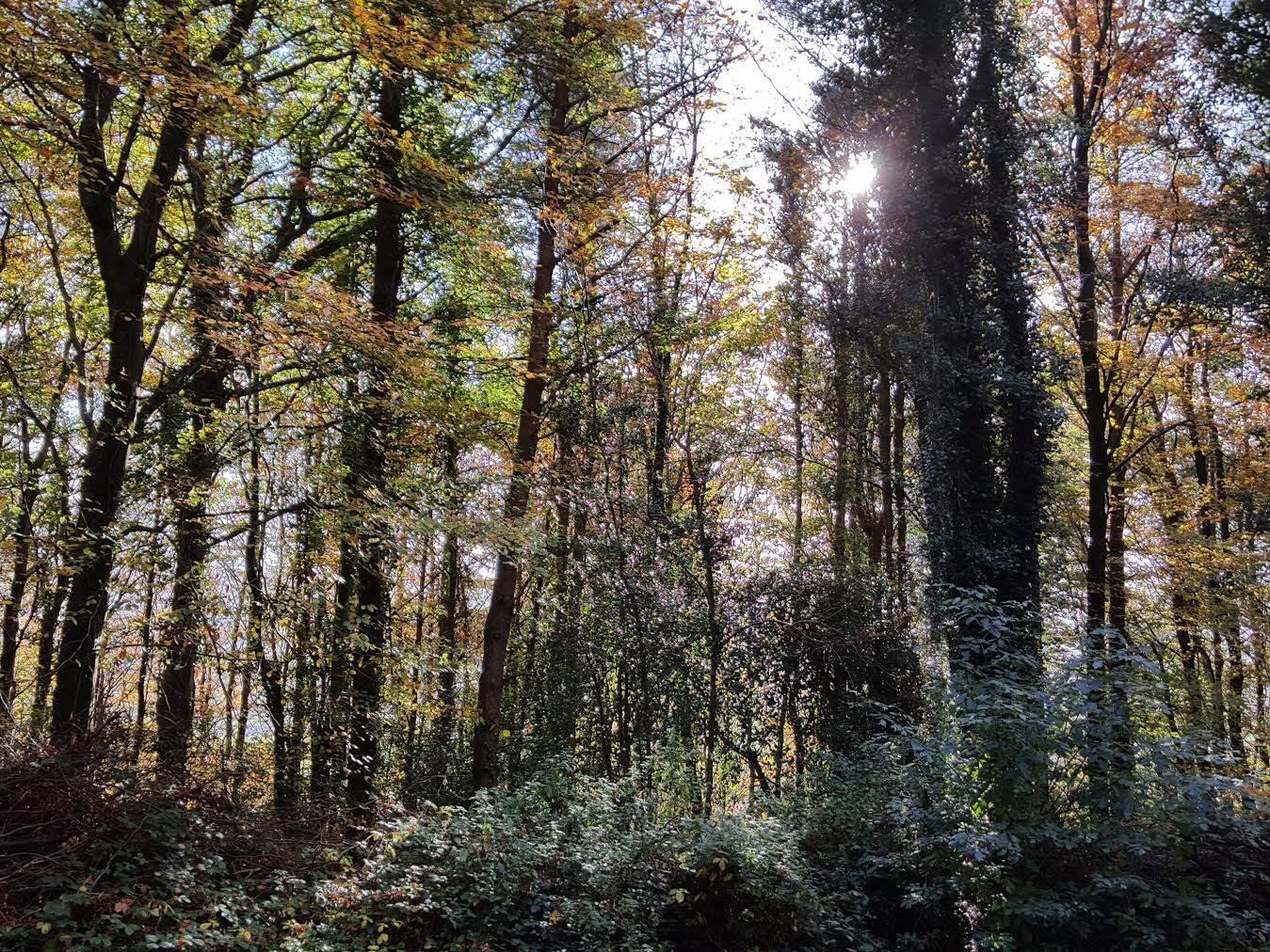 Mullins Tree Care