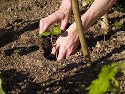Piltown Tree Care