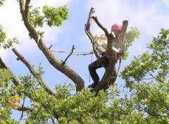 Healy Tree Felling
