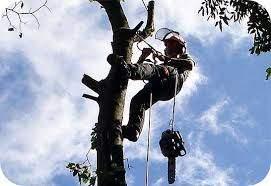 Healy Tree Felling Dungarvan