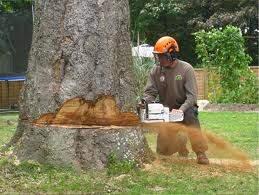 hickeys treecutting and garden maintance